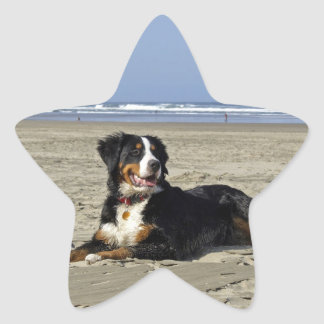 Bernese Mountain dog beautiful photo star stickers