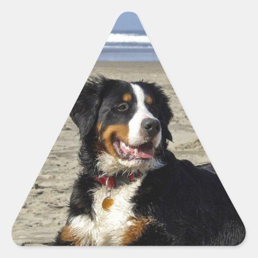 Bernese Mountain dog beautiful triangle stickers