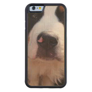 Bernese Mountain Dog Breed Maple iPhone 6 Bumper Case