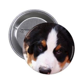 Bernese Mountain Dog Button