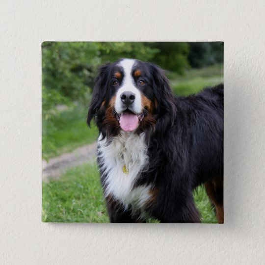 Bernese Mountain dog button, pin, gift idea 15 Cm Square Badge