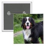 Bernese Mountain dog button, pin, gift idea 15 Cm Square Badge