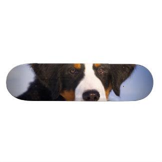 Bernese Mountain Dog - Cute Puppy Photo 18.1 Cm Old School Skateboard Deck
