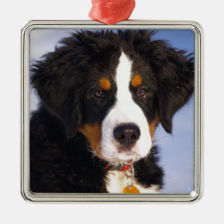 Bernese Mountain Dog - Cute Puppy Photo Christmas Ornament