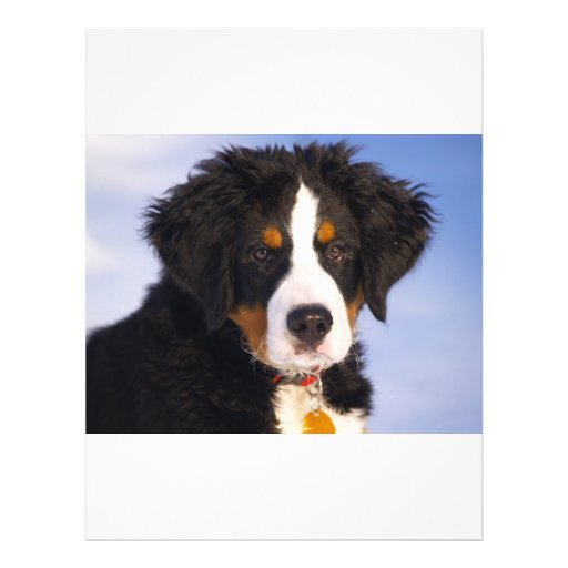 Bernese Mountain Dog - Cute Puppy Photo Flyer