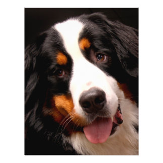 "Bernese Mountain Dog 8.5"" X 11"" Flyer"