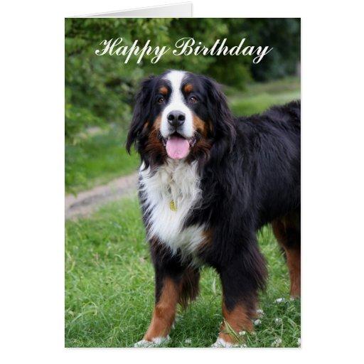 Bernese Mountain dog happy birthday greeting card
