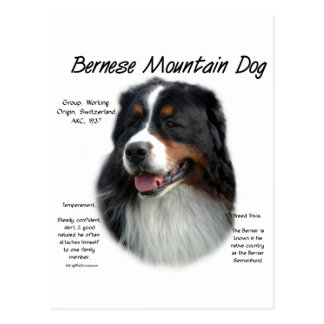 Bernese Mountain Dog History Design Postcard