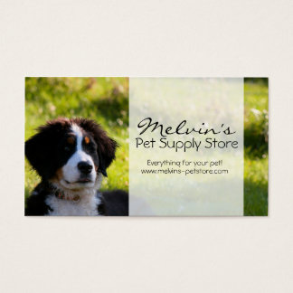 Bernese mountain dog on green grass pet photo business card