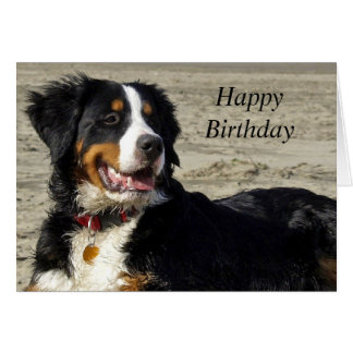 Bernese Mountain dog photo custom birthday card