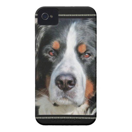 Bernese Mountain Dog Photo Image iPhone 4 Cases