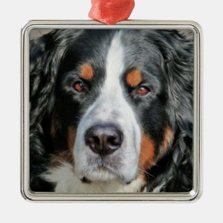 Bernese Mountain Dog Photo Image Silver-Colored Square Decoration