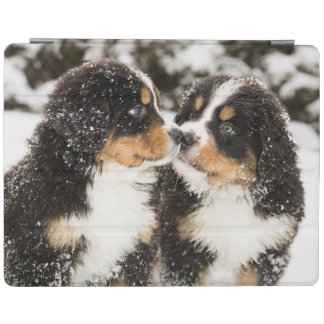 Bernese Mountain Dog Puppets Sniff Each Other iPad Cover