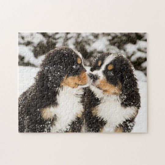 Bernese Mountain Dog Puppets Sniff Each Other Jigsaw
