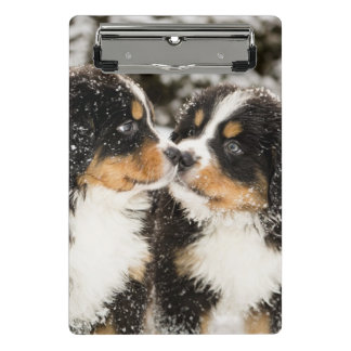 Bernese Mountain Dog Puppets Sniff Each Other Mini Clipboard