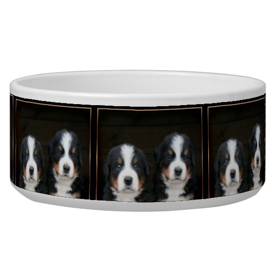 Bernese mountain dog puppies Custom Dog bowl