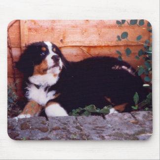 bernese mountain dog puppy mousemat