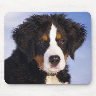 Bernese Mountain Dog Puppy Mousepad