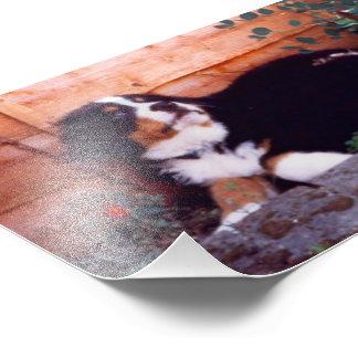 bernese mountain dog puppy photo print