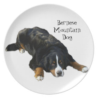 Bernese Mountain Dog Rug Pose Plate