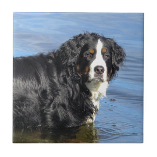 Bernese Mountain Dog Small Square Tile