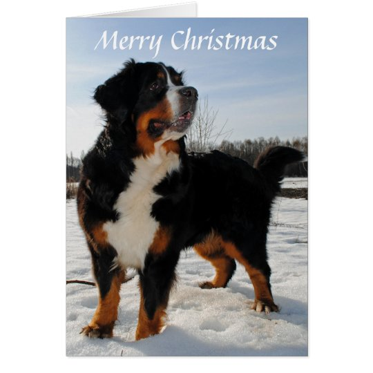 Bernese Mountain dog snow holiday Christmas Card