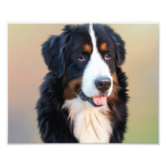 Bernese mountain dog, the obedient dog photo print