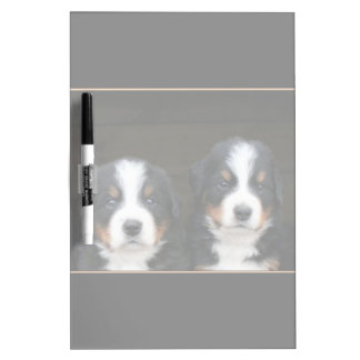 Bernese mountain dogs dry erase white board