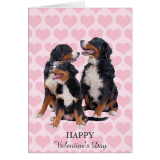 Bernese Mountain Dogs Hearts Valentine's Day Card