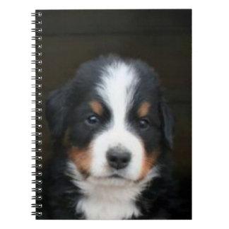 Bernese mountain dogs notebook