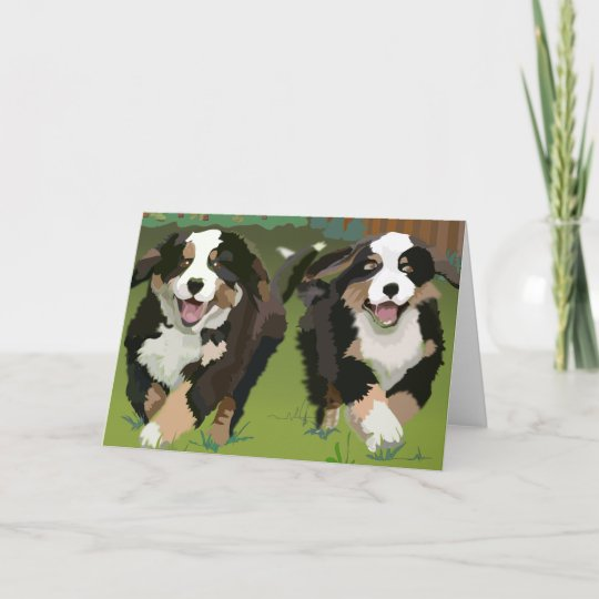 Bernese Mountain Dogs notecards