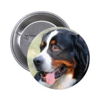 Bernese Mountain Puppy Button