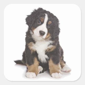 Bernese Mountain Puppy Dog Sticker / Seal