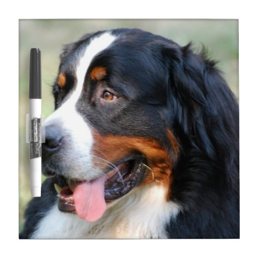 Bernese Mountain Puppy Dry Erase Board