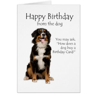 Bernese Mt. Dog Birthday Card