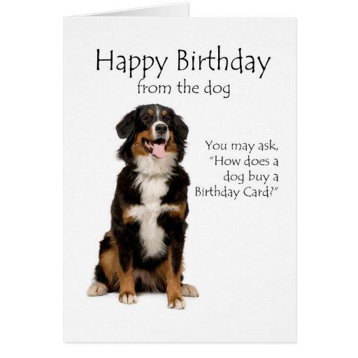 Bernese Mt. Dog Birthday Card