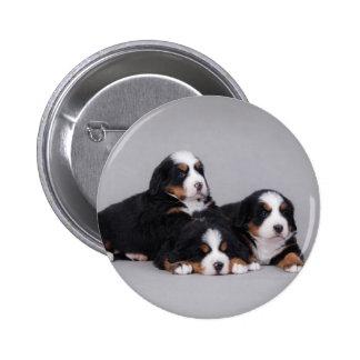 Bernese puppies 6 cm round badge