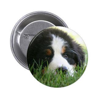 Bernese Puppy 6 Cm Round Badge