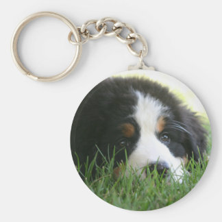 Bernese Puppy Basic Round Button Key Ring