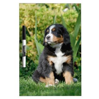 Bernese puppy Dry-Erase board