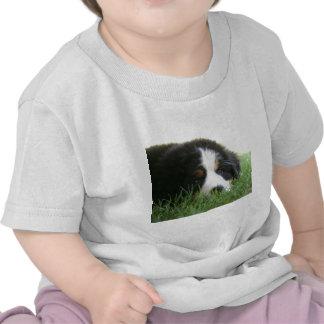 Bernese Puppy T-shirt