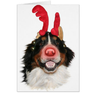 Bernese Roodolph (Rudolph) Card