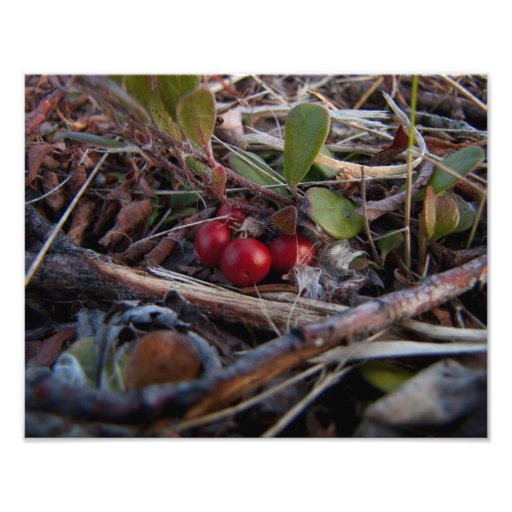 Berries and Twigs Photo Print