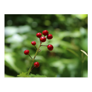 Berries in the Mountain Postcard