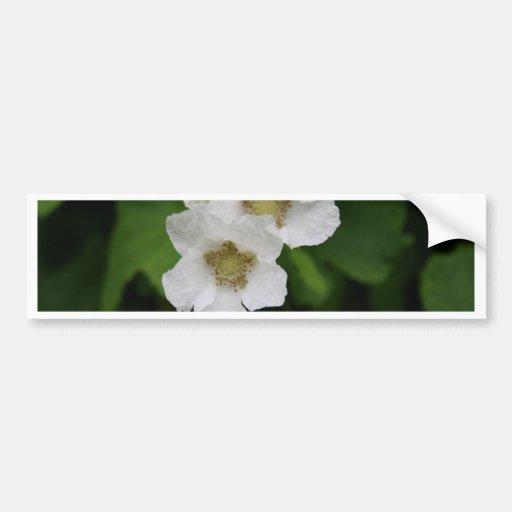 Berry Blossoms Bumper Sticker