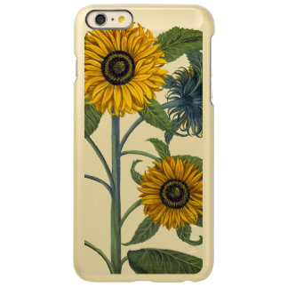 Besler: Sunflower