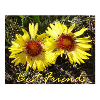 Best Friends Colorado Wild Flowers Post Card