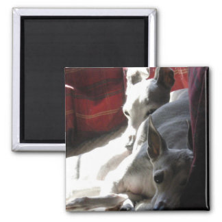 """Best Friends"" italian greyhound photo Square Magnet"