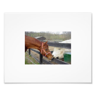 Best Friends Photo Print