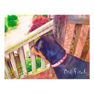 Best Friends Veterinary  Reminder Postcard